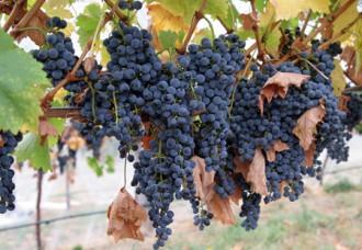 Wine-tourism7