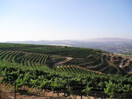 Wine-tourism9