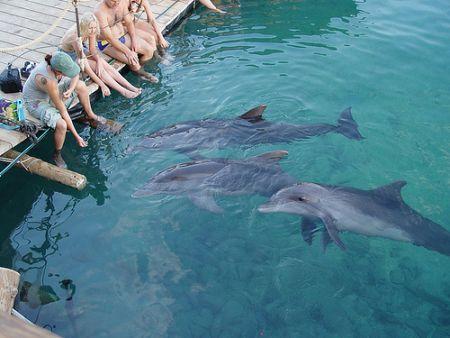 Dolphin_Reef_in_Eilat